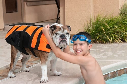 Tips for swimming with your dogs