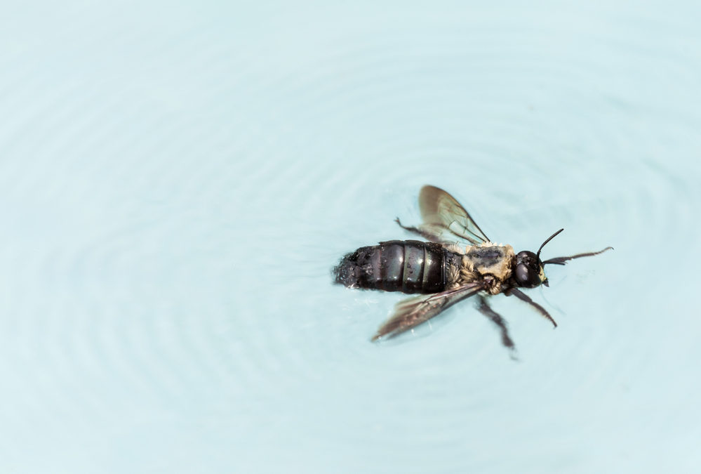 Why are there bugs in the pool water?